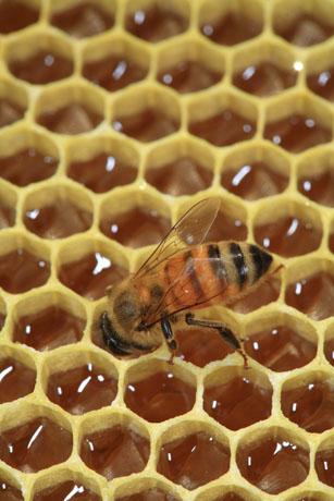 น้ำผึ้ง รักษาผิว